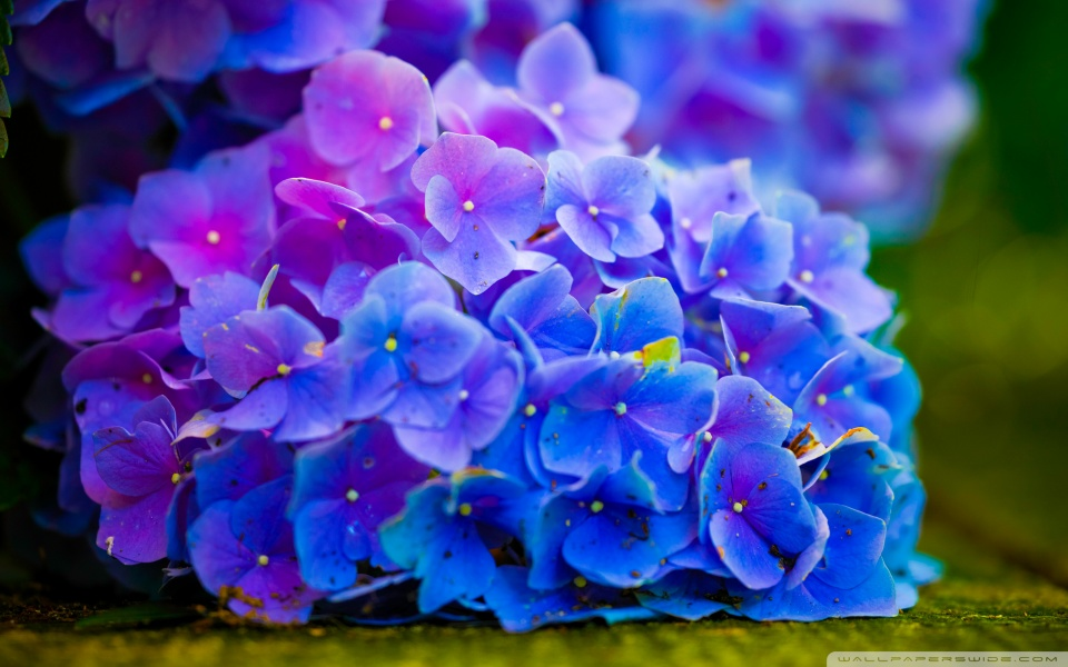 flower_power_4-wallpaper-960x600
